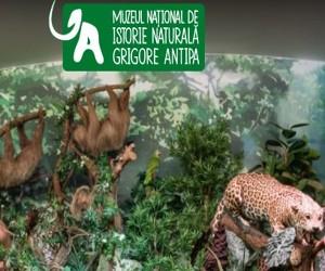 Muzeul Antipa isi redeschide portile pe 1 iunie!