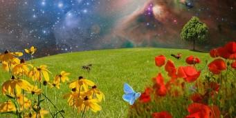 Extemporal la stiintele naturii