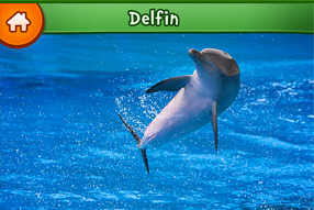 Invata animamele delfin
