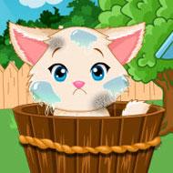 Lovely Kitten Caring